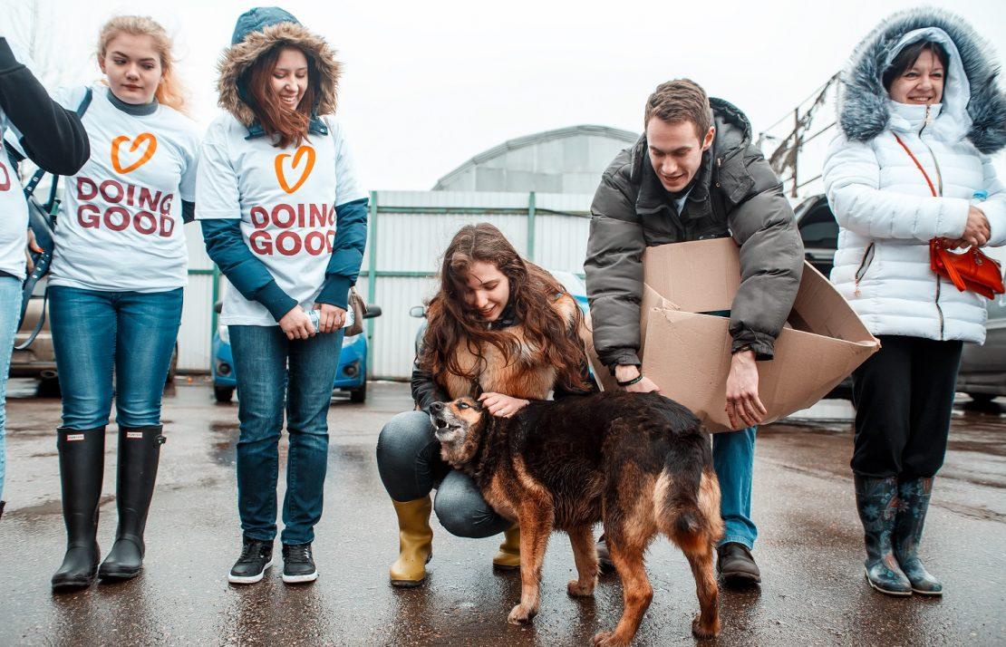 Ayuda a un Refugio de Animales 39