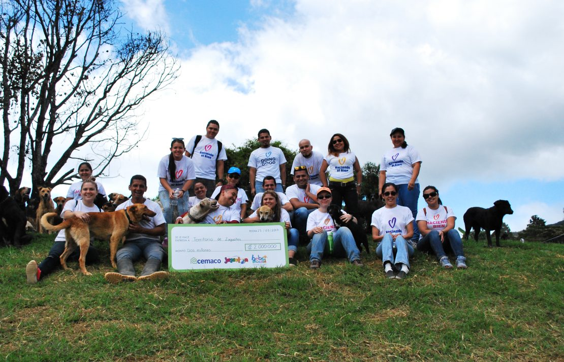 Employees volunteering with dogs