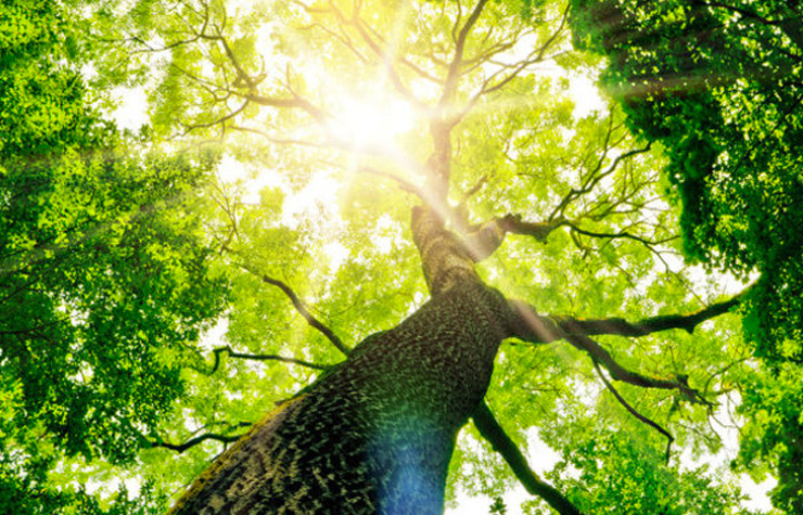 Trees provide shade and oxygen. [Shutterstock image]