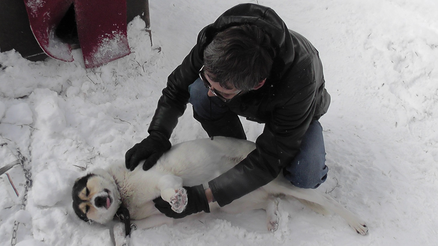 Volunteers from Peerapp in Russia show love to the shelter dogs.